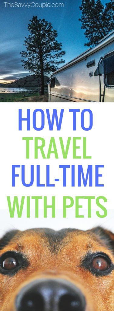 Interested in full-time RV living? Don't want to leave your pets behind? Or your chickens? Aaron and Hayden Hall interview with The Savvy Couple to share their experience living in an RV with all of their pets. The Hall's also share how to keep their Vegan lifestyle while out on the open road. This is a must read! RV living | Full-time RV | Vegan | Vegan Lifestyle | Vegan Diet | Vegan Voyage |