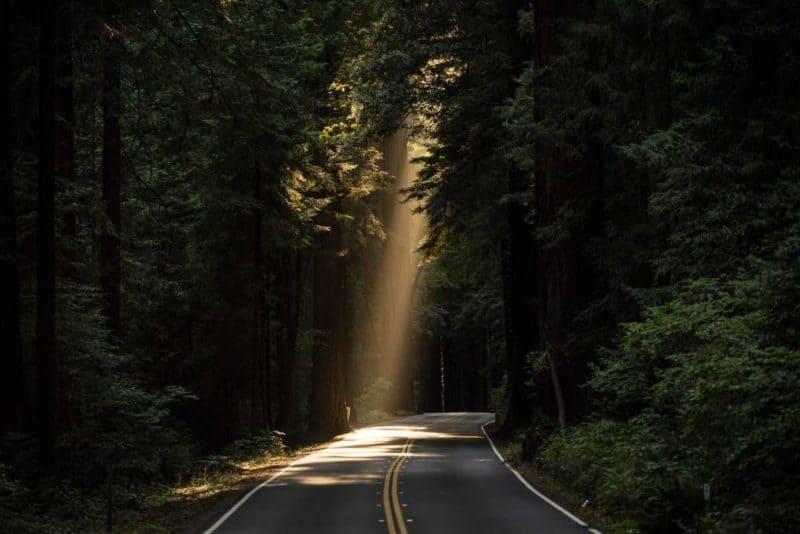 single ray of sunlight on road through dark woods