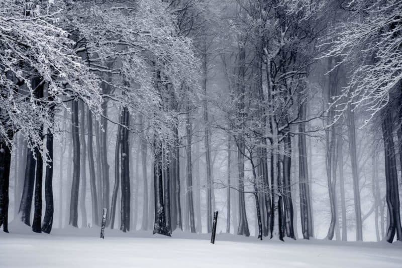 winter woods covered in snow
