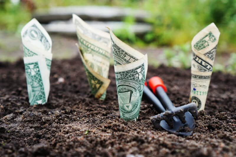 "money ""growing"" out of the dirt, myth that money grows on trees teaching kids about credit scores"